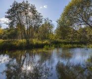 森林河在秋天森林里 库存图片