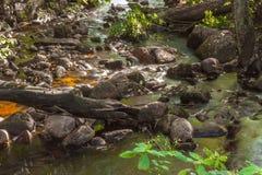 森林河瀑布石头 库存照片