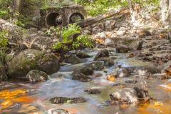 森林河瀑布石头 库存图片