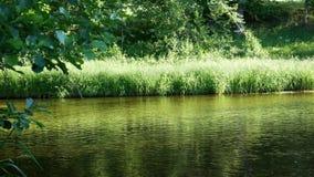 森林河用清楚的水 r 股票录像