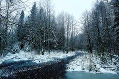 森林河的风景 免版税库存图片