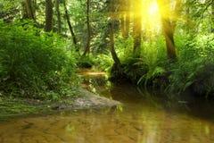 森林河 库存照片