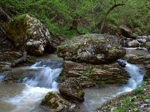 森林河 免版税库存图片