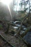 森林河 库存图片