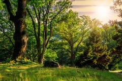森林沼地在树的树荫下在日落的 免版税图库摄影