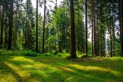 森林沼地在树的树荫下 免版税库存图片