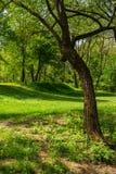 森林沼地在树的树荫下 库存图片
