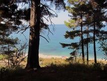 森林沼地有海视图 免版税库存照片