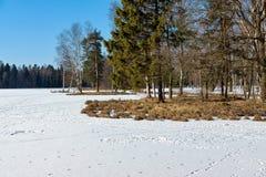 森林沼地的春天风景 库存照片