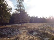 森林沼地 库存图片
