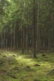 森林沼地 免版税库存照片