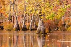 森林沼泽地客商用水池NC国家公园美国 库存图片