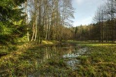 森林沼泽地 库存照片
