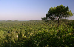 森林法语横向 库存图片