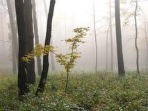 森林波兰roztocze 免版税库存照片
