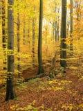 森林波兰roztocze 库存照片