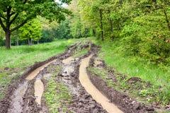 森林泥泞的路 库存照片