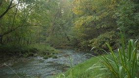 森林流动在石头中的河小河 森林跑在森林里的春天河 股票视频