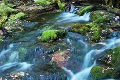 森林流 免版税库存照片