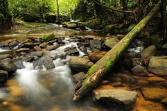 森林流 库存图片