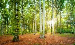 森林海岛 免版税库存照片