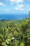 森林海洋雨 库存图片