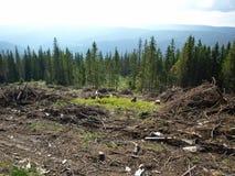 森林清楚破坏 免版税库存图片