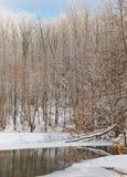 森林湖冬天 免版税库存照片