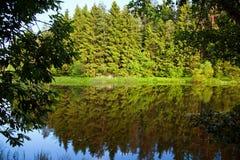 森林湖包围的结构树 免版税库存照片