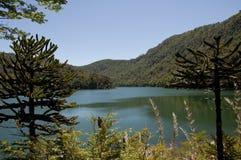 森林湖包围 图库摄影