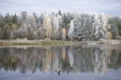 森林湖在10月霜普斯克夫地区,俄罗斯的岸 免版税库存照片