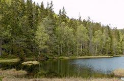 森林湖夏天 免版税库存照片