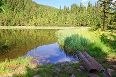 森林湖山夏天 免版税库存照片