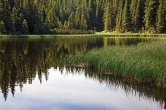 森林湖山夏天 免版税图库摄影