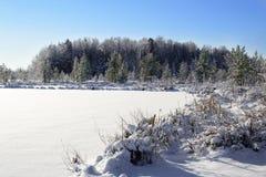 森林湖时间冬天 树和岸在雪 一冻结的lakeon每冷淡的冬日 免版税库存图片