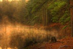 森林湖有薄雾的早晨 免版税图库摄影
