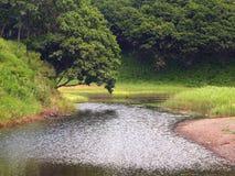 森林湖横向 免版税库存图片