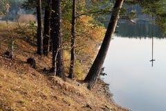 森林湖的岸 免版税库存照片