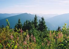 森林湖的春天全景 免版税库存照片