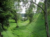 森林湖的看法在夏天 库存照片