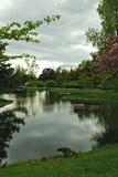 森林湖草坪镜子 库存图片