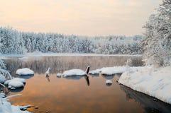 森林湖被解冻的冬天 免版税库存照片