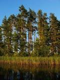 森林湖边 免版税库存图片