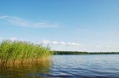 森林湖风景 免版税库存照片