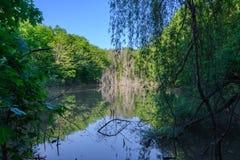 森林湖 免版税库存照片
