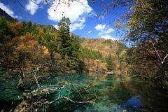 森林湖 库存图片