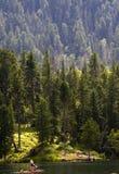森林湖tiaga 免版税库存照片
