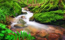 森林溪在青苔隐蔽的环境里 免版税库存照片