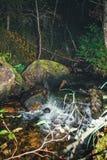 森林溪瀑布 库存图片