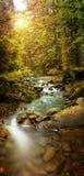 森林溪的全景图象在山的 库存图片